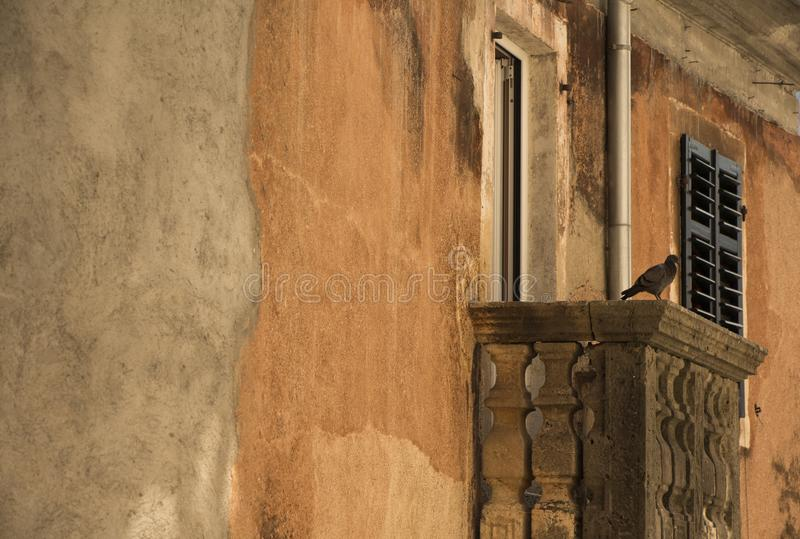 Fågel på balkongen royaltyfri fotografi
