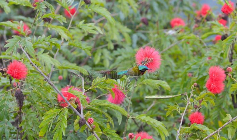 Fågel på det blomstra trädet royaltyfri fotografi