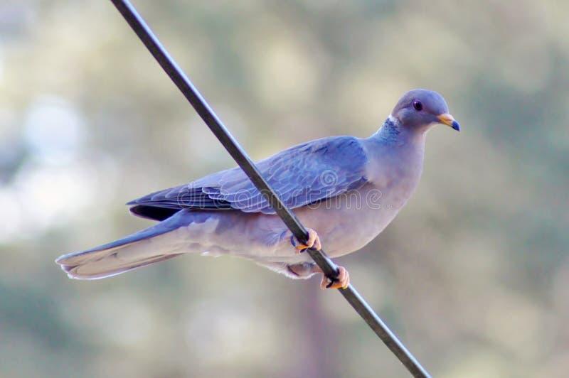 Fågel på en binda royaltyfri foto