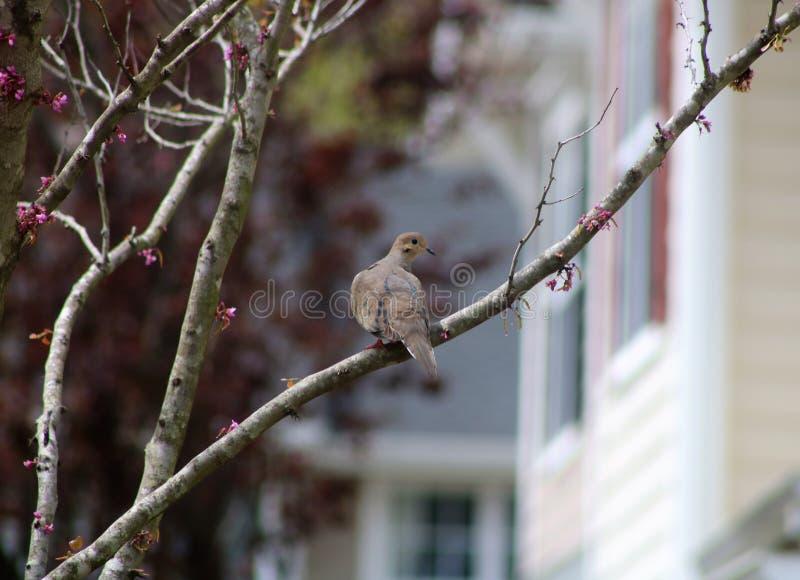 Fågel på en förgrena sig arkivbilder