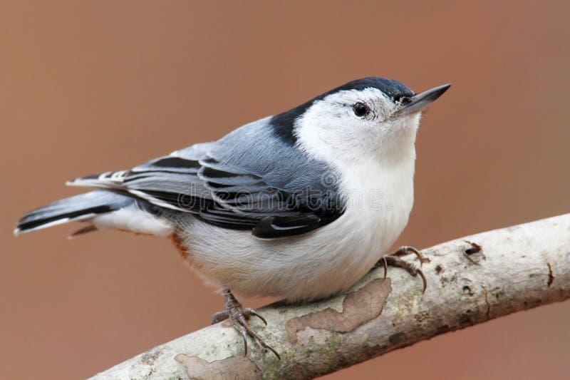 Fågel på en förgrena sig arkivfoto