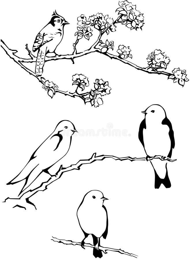 Fågel på en filialvektor, fåglar fotografering för bildbyråer