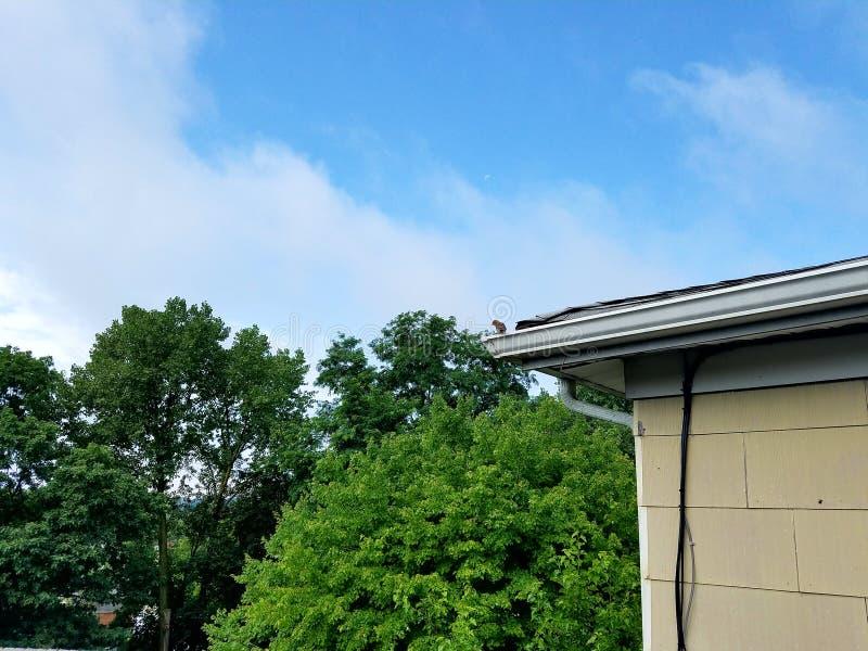 Fågel på en taklägga arkivfoton
