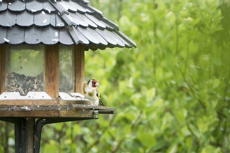 fågel på förlagemataren royaltyfria foton