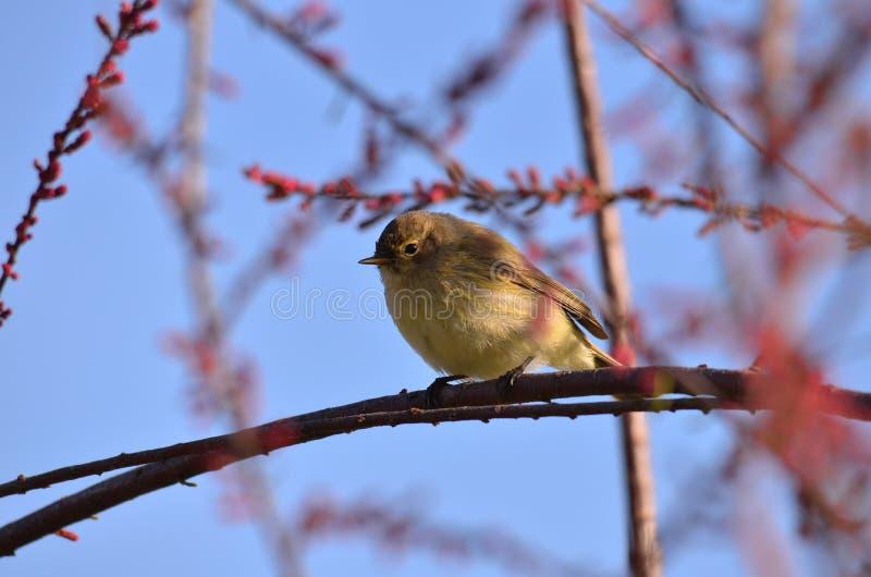 Fågel på filialen av ett träd fotografering för bildbyråer