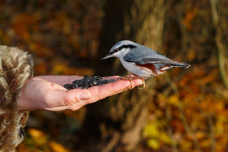 Download Fågel på handen fotografering för bildbyråer. Bild av utomhus - 37348503