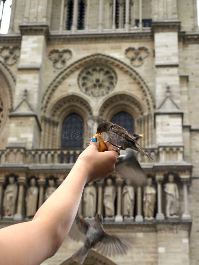 Fågel på Notre Dame royaltyfria foton