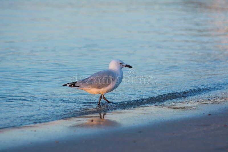 Fågel på stranden Djur i naturlig sikt arkivfoto