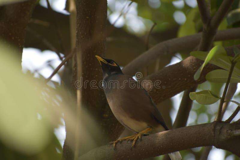 Fågel på torn fotografering för bildbyråer