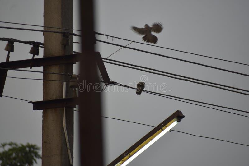 Fågel på torn royaltyfri fotografi