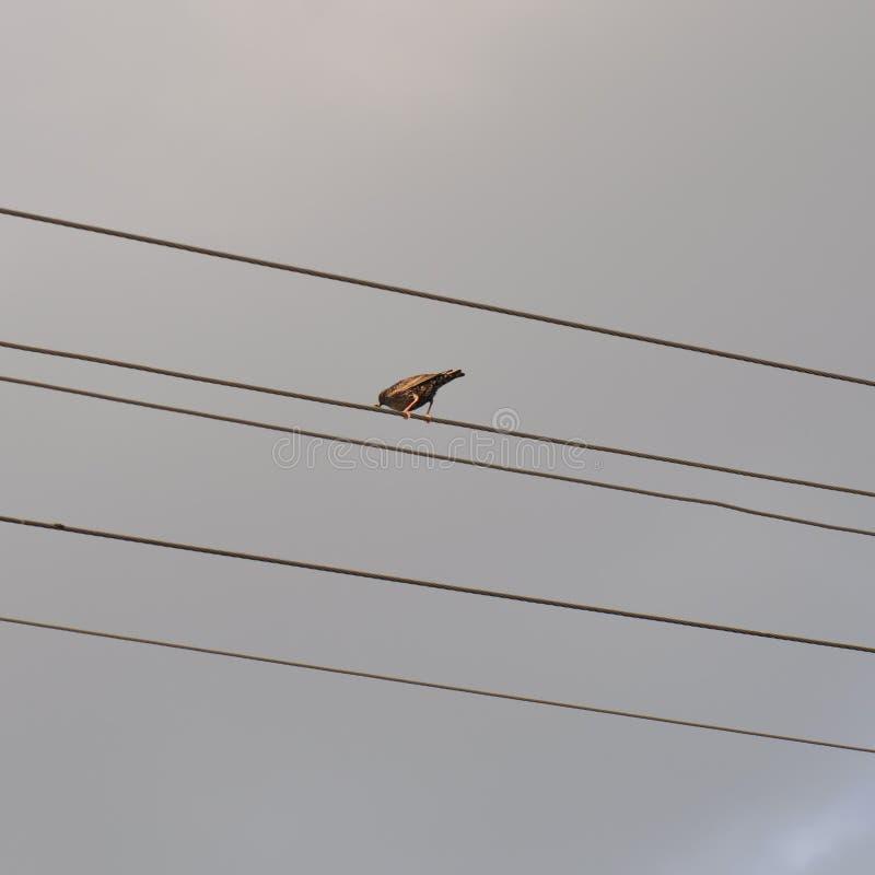 Fågel på tråd royaltyfri fotografi