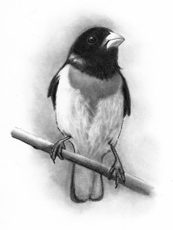 Fågel Röd-gången mot Grosbeak, blyertspennateckning, grafit arkivfoto