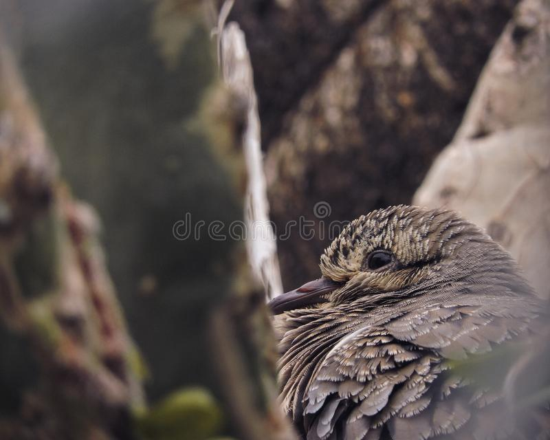 Fågel` s synar på ett träd arkivbilder
