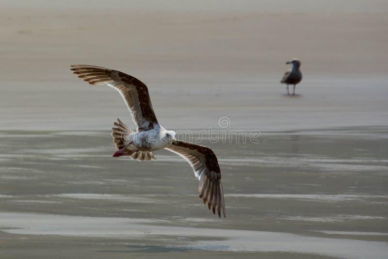 Fågel-skumslev fotografering för bildbyråer