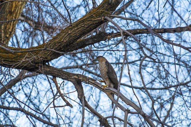 Fågel som sätta sig på den avlövade filialen av ett brunt träd mot ljus himmel arkivbilder
