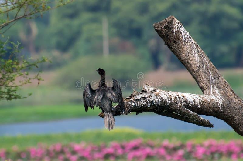 Fågel som sätta sig på ett stupat träd arkivbilder