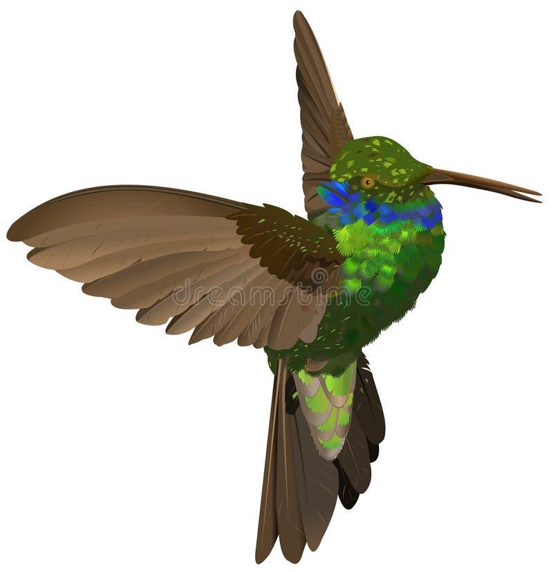 fågel som surr vektor illustrationer