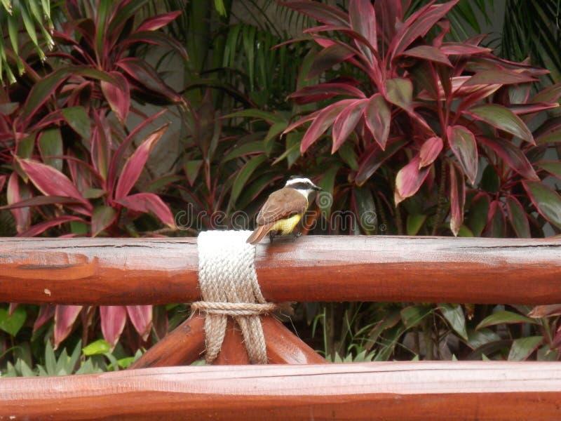 Fågel som vilar på ett staket Post arkivbilder
