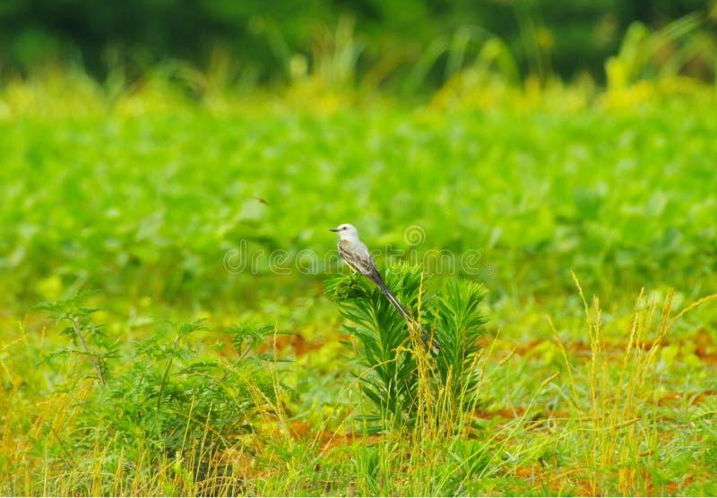 Fågel som vilar på växten royaltyfria bilder