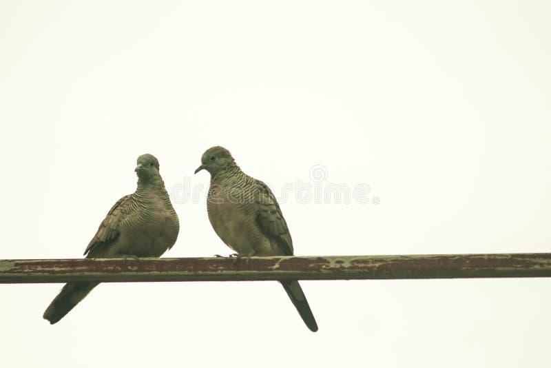 fågel två arkivbild