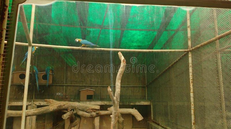 Fågelarena royaltyfri fotografi