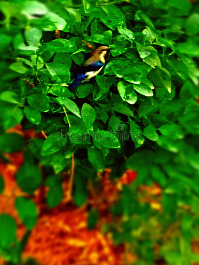 Fågelbild Natur _ arkivfoton
