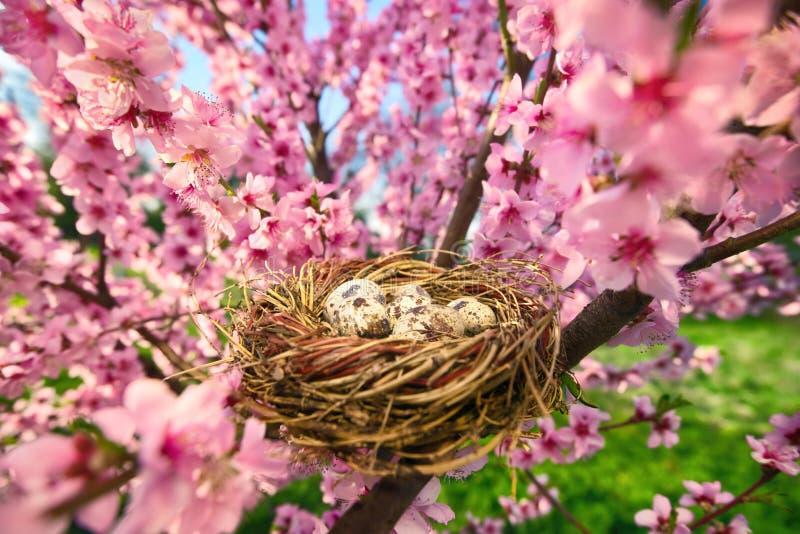 Fågelbo med ägg i ett blomstra träd royaltyfri foto