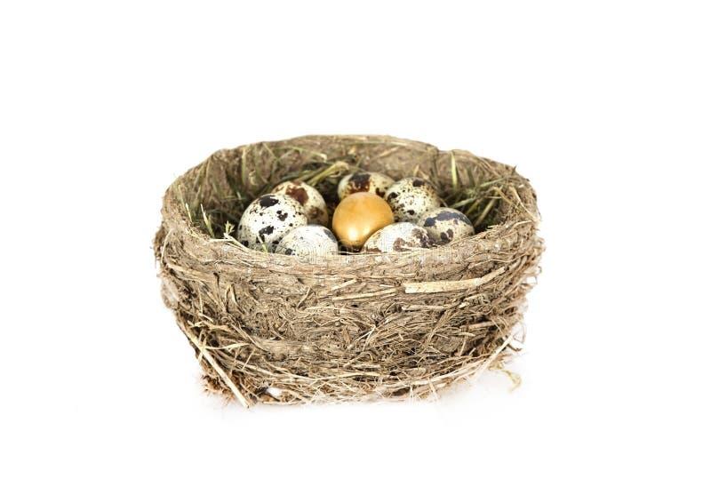 Fågelbo med ägg och ett guld- ägg royaltyfria foton