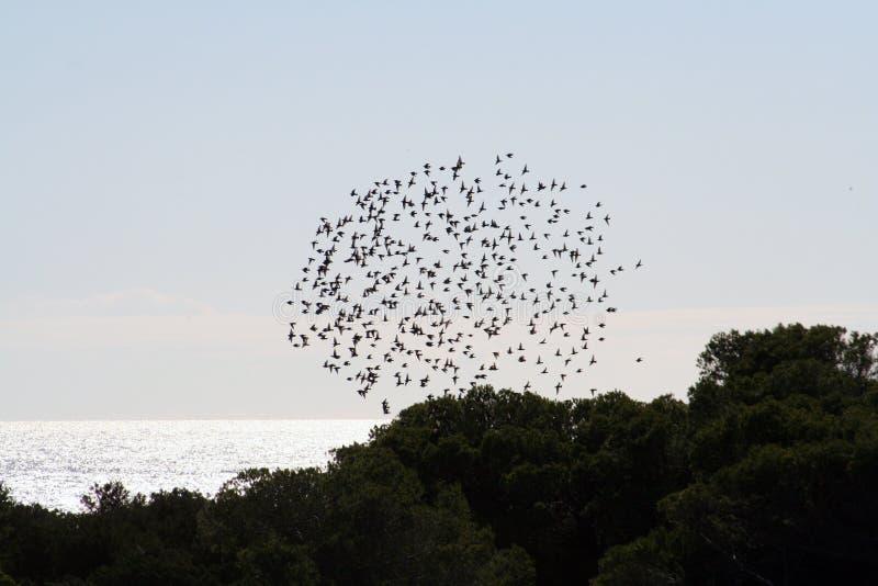 fågelcirkel arkivbilder