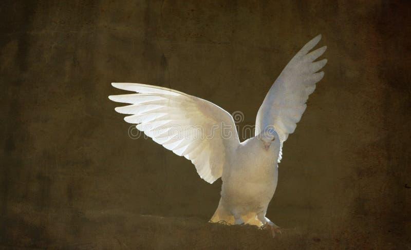 Fågelduva på taklägga royaltyfri fotografi