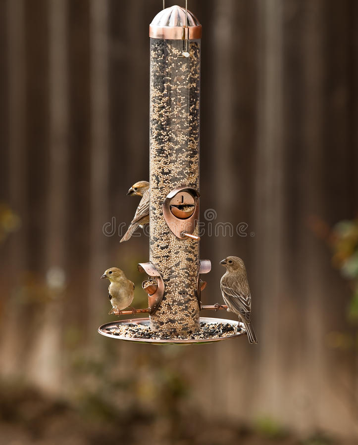 fågelförlagematare arkivbild