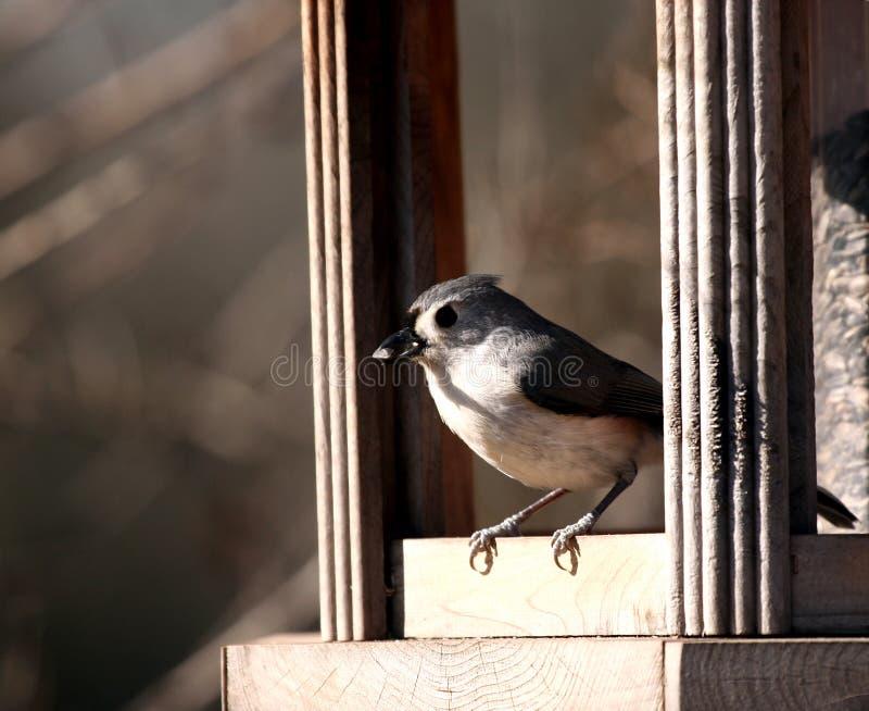 fågelförlagematare arkivfoton