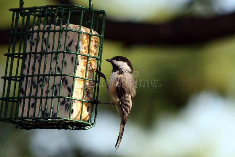 fågelförlagematare royaltyfri fotografi