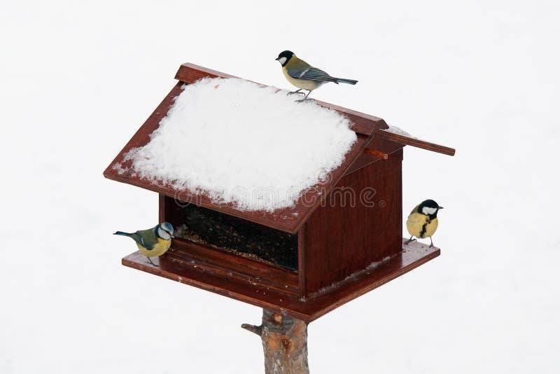 Fågelförlagematare i vinter royaltyfri bild