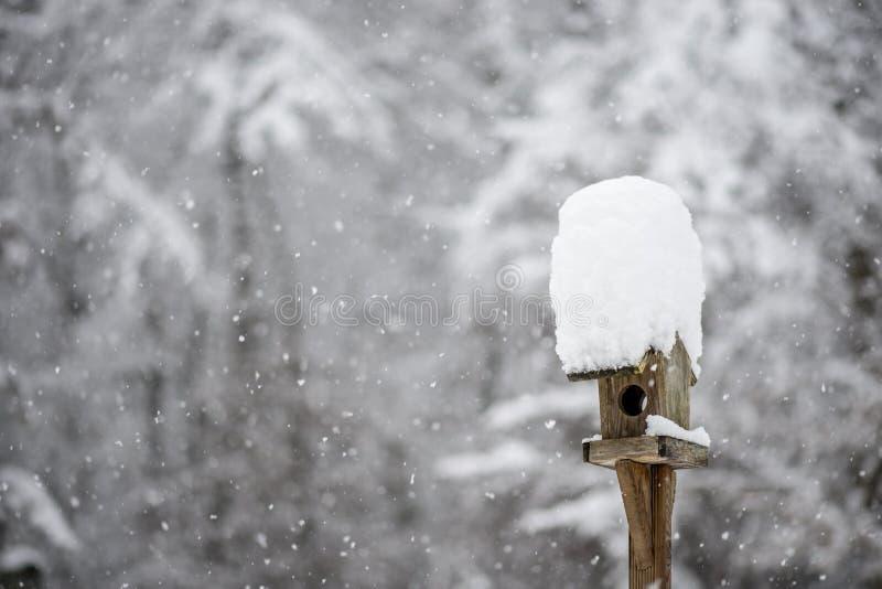 Fågelförlagematare med en hatt av vintersnö fotografering för bildbyråer
