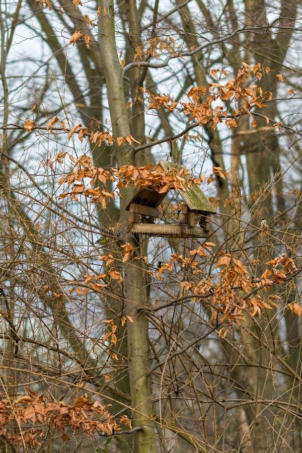 Fågelförlagematare som förläggas på trädet i skogen, trävoljär i höst royaltyfria foton