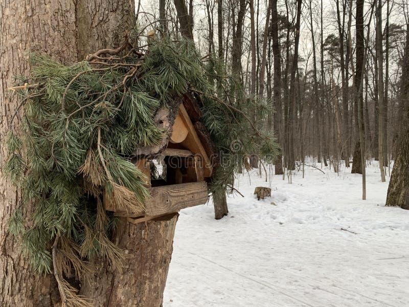 Fågelförlagemataren på sörjer trädet i vinter royaltyfria bilder