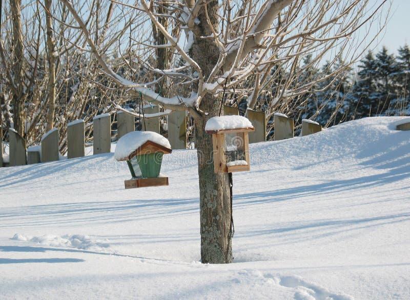 fågelförlagematarevinter arkivfoton