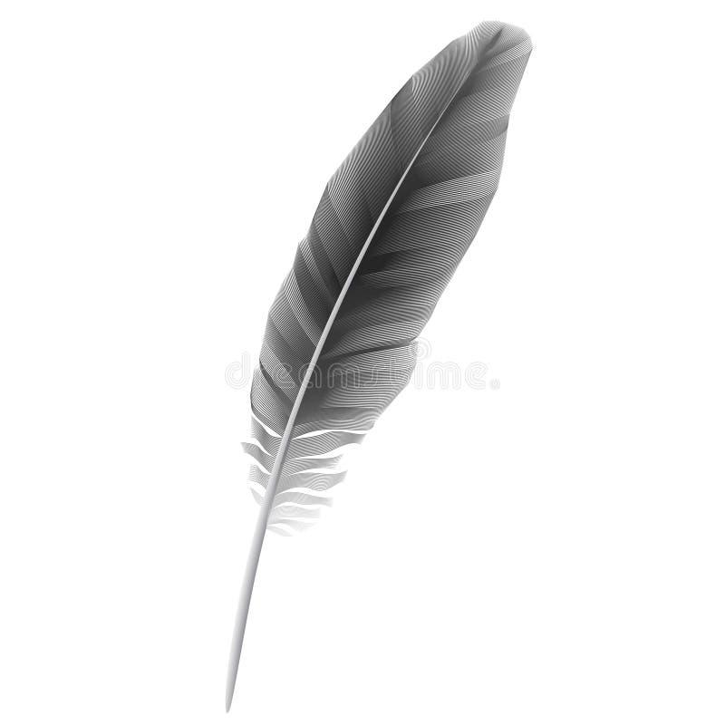 fågelfjäder stock illustrationer
