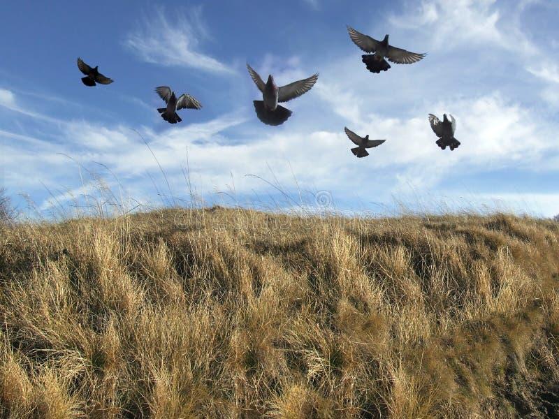 fågelflock arkivbild
