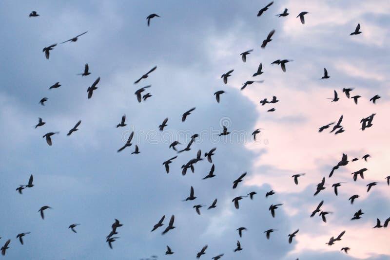 fågelfluga i blå himmel med vita moln royaltyfri foto