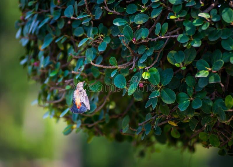 Fågelflugan i det offentligt parkerar royaltyfri bild