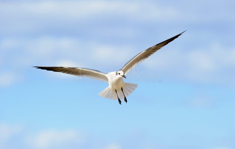 Fågelflyg fotografering för bildbyråer