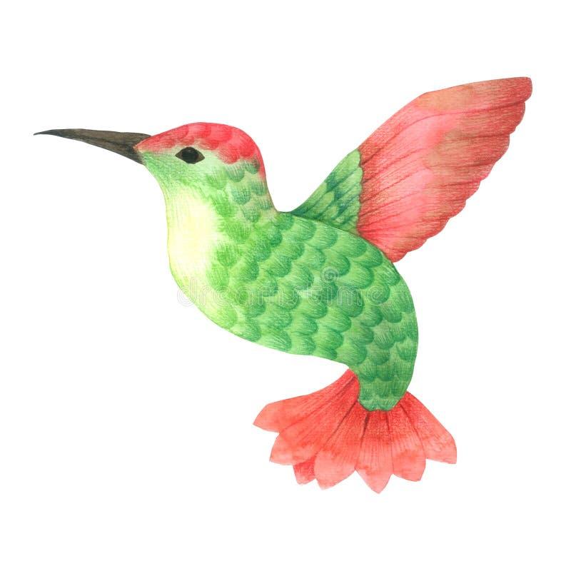 Fågelflygvattenfärgen som isolerades på den drog vita grön och röd fågelhanden för bakgrund, målade för hälsningkortet, tapet royaltyfri illustrationer