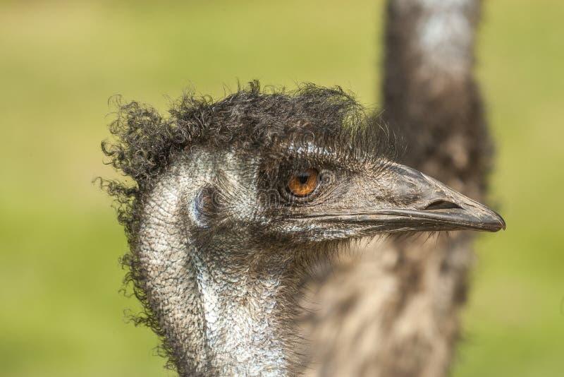 Fågelframsida arkivfoton