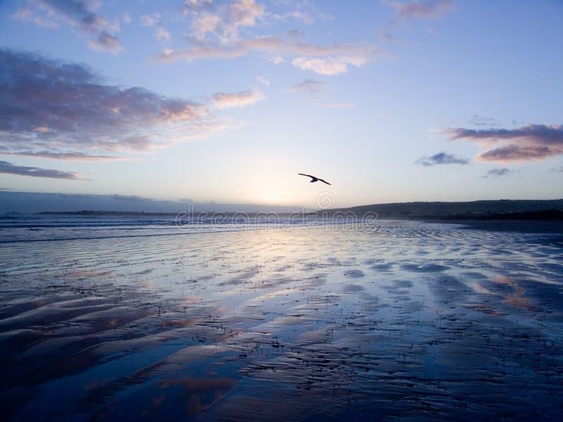 fågelglidning över sanden royaltyfria bilder