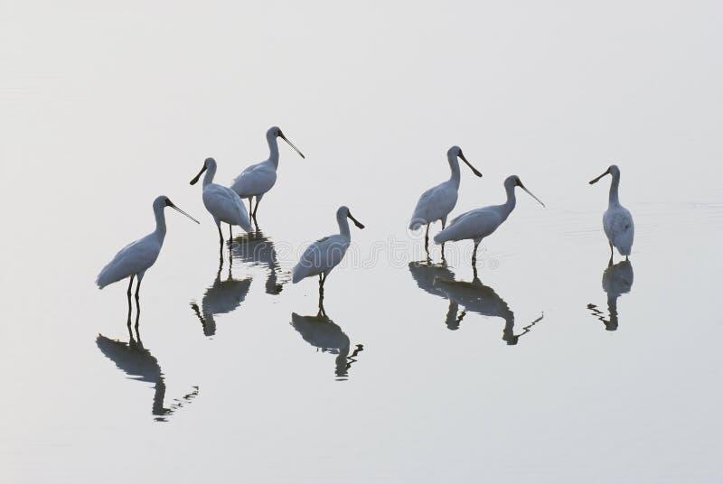 fågelgrupp royaltyfria foton