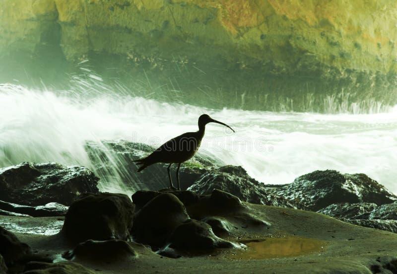 fågelhav royaltyfri fotografi