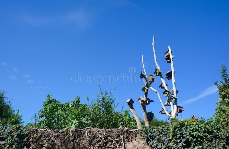 Fågelhus på det kala trädet royaltyfria foton