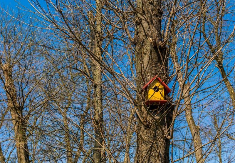 Fågelhus på en tree royaltyfri fotografi
